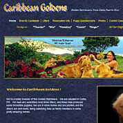 Caribbean Goldens - Breeder of Fine Golden Retievers