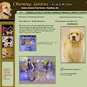 Champion Golden Retriever Stud